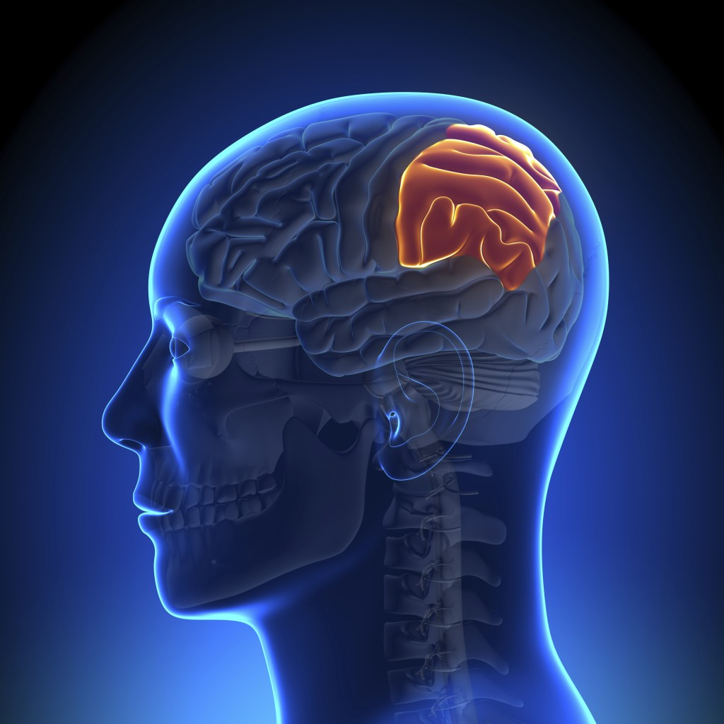 Parietal Lobe Injury Lawyers California | Parietal Lobe ...